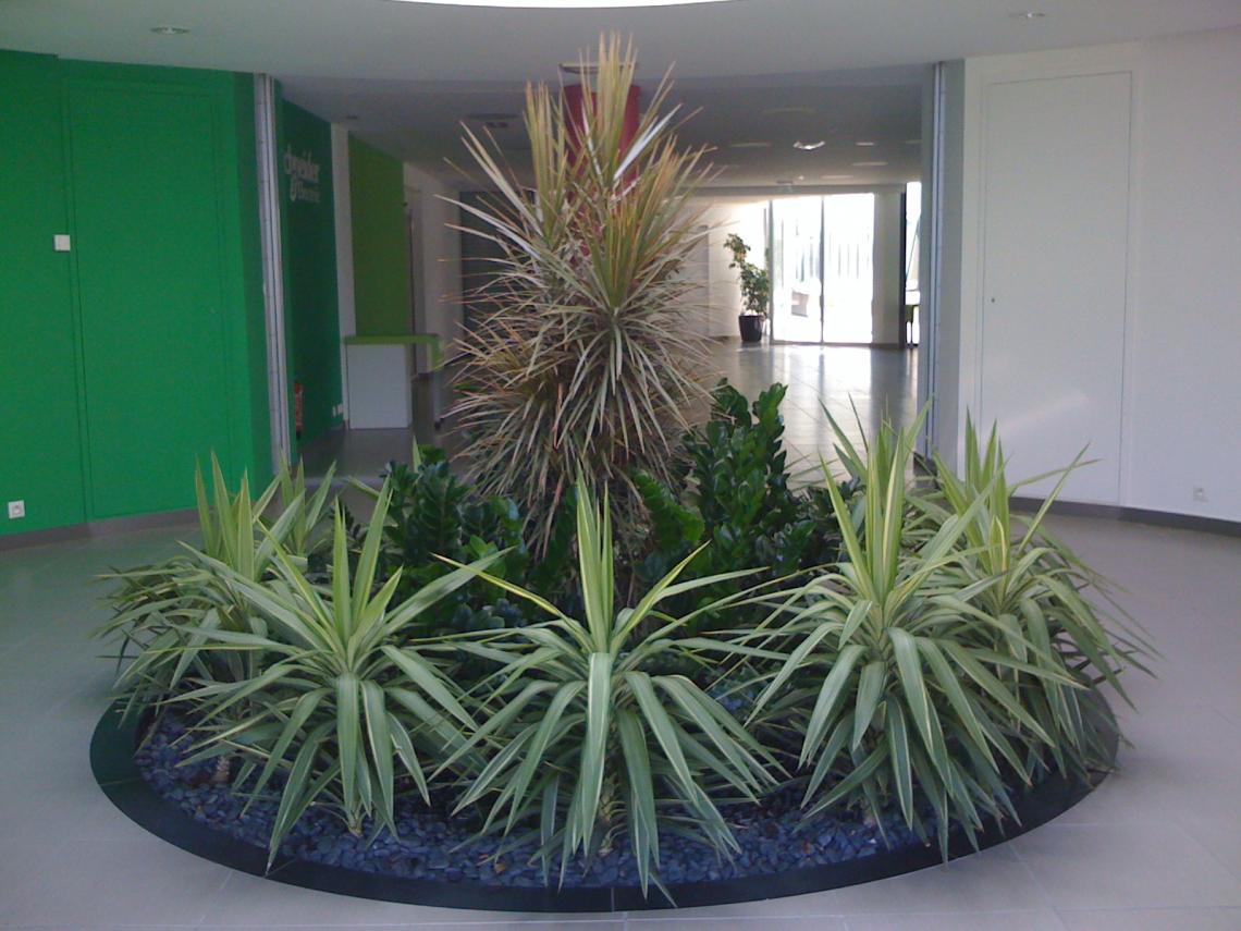 zamioculcas dracena yucca
